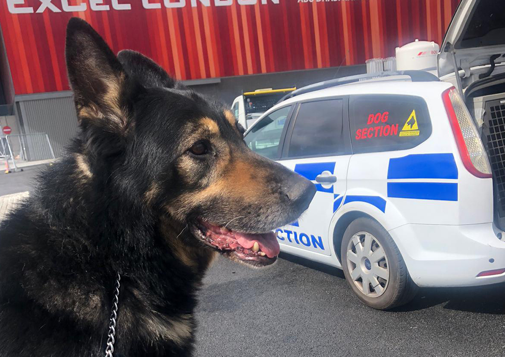Explosive Detection Dog hire