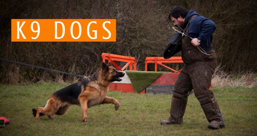 What is a K9 Dog? K9 Dog Breeds, Training & Duties