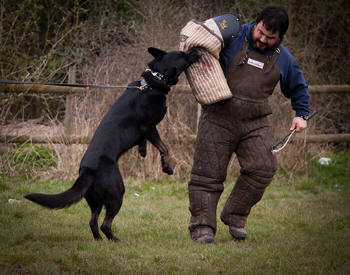Can Any Dog Be A Protection Dog