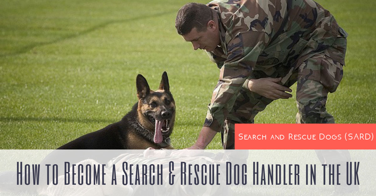 Search and Rescue Dogs (SARD): How to Become a Search & Rescue Dog Handler in the UK