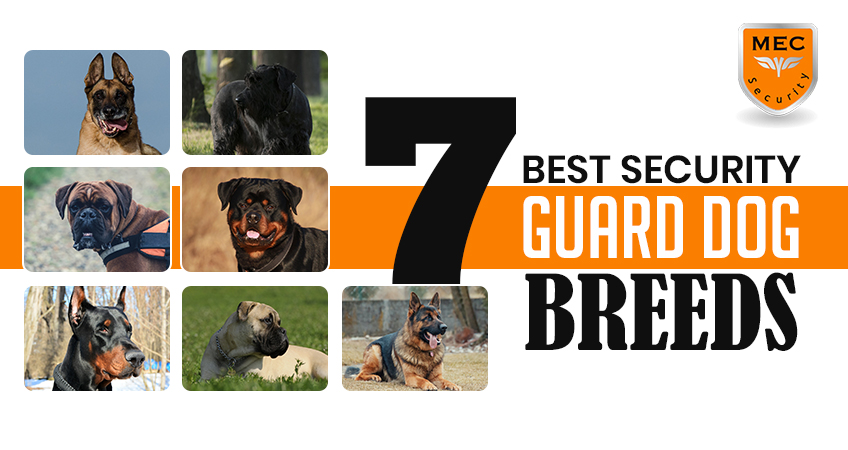Best Guard Dog Breeds in the UK