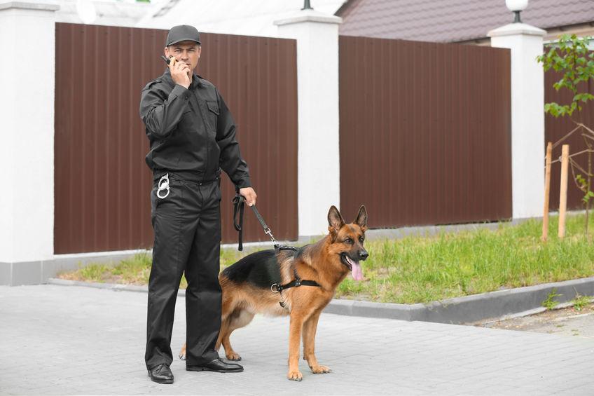 Cadaver Dog Smell A Body