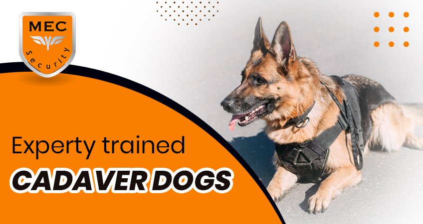 Expertly Trained Cadaver Dogs